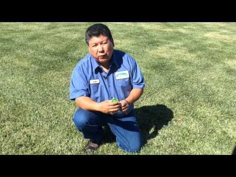 How to Make Your Existing Lawn WaterWise